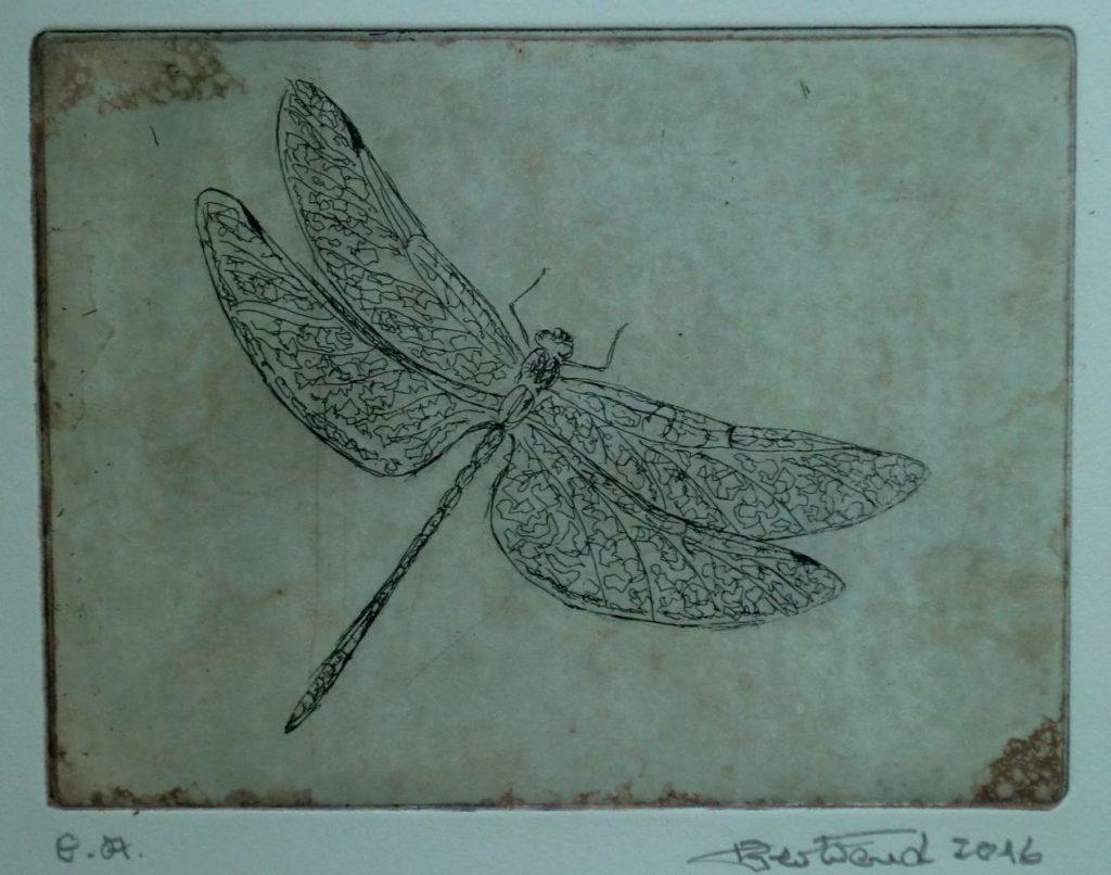 """Libelle"" Radierung 15x20cm"